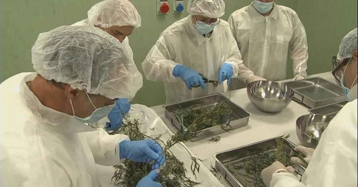 cannabis-italy