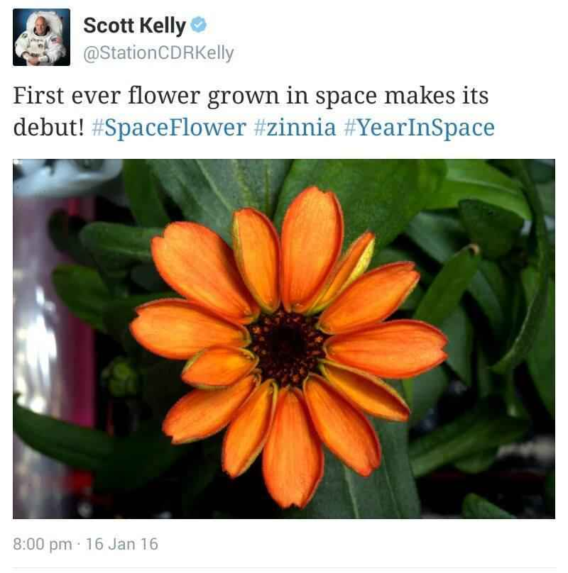 flower-scott-kelly-space