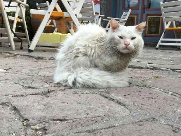 γατακι προ