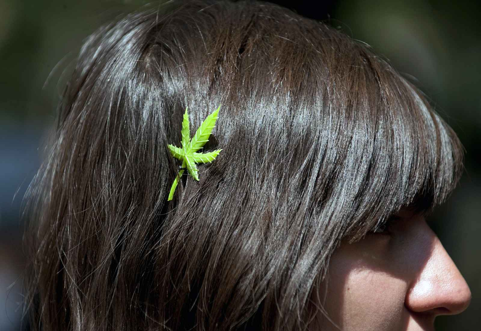A woman wears a Marijuana hair slide during a rally in support of the International Day for the Liberation of Marijuana, in Mexico City, on May 8, 2010. AFP PHOTO/Alfredo ESTRELLA (Photo credit should read ALFREDO ESTRELLA/AFP/Getty Images)