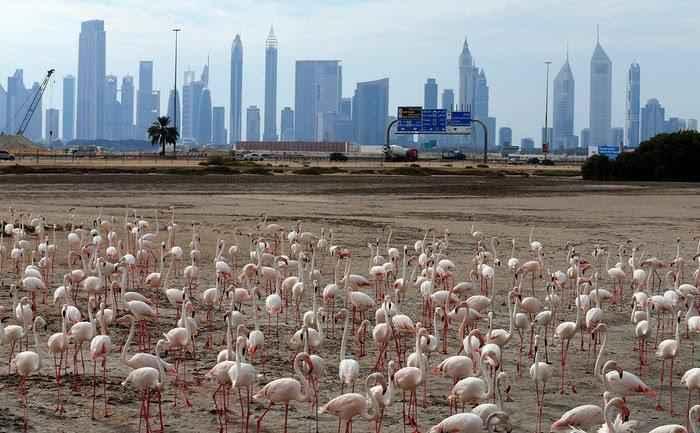 flamingos-dubai