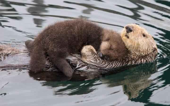 otter-baby